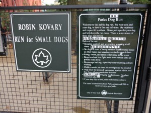 Robin Kovary Small Dog Run New York City