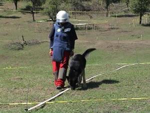 Mine Detection Dog in Bosnia