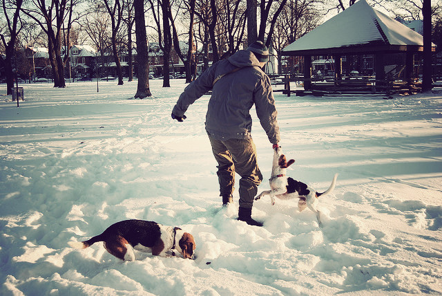 Dufferin Grove Park Off-Leash Dogs