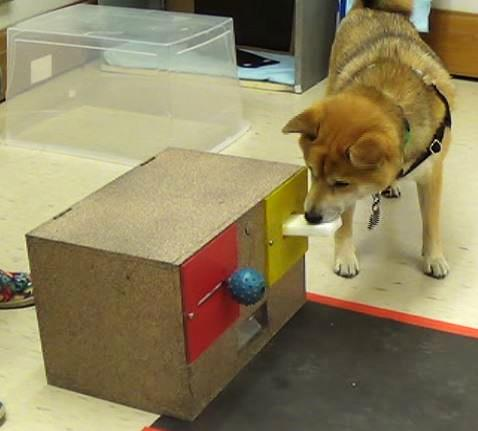 Dog CI Lever