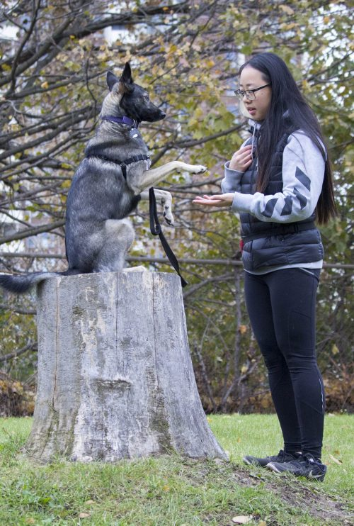 stephanie tran when hounds fly dog training. Black Bedroom Furniture Sets. Home Design Ideas