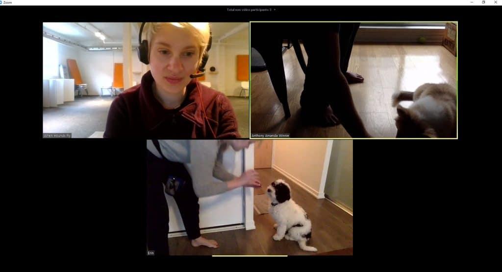 Online Dog Trainer via Zoom Webconference